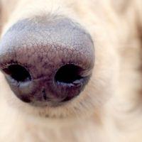 犬の鼻のアップ写真