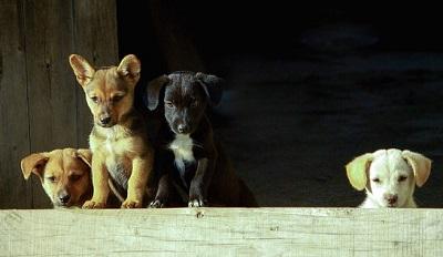 何かに興味津々な子犬たち