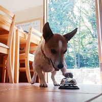 ベルを鳴らす犬