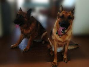 レナちゃんと同居犬