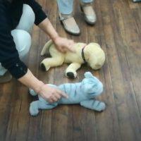 ペット安全生活セミナー