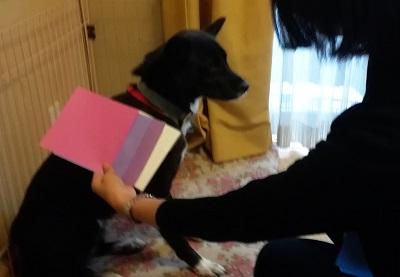 パーソナルカラー診断をするミックス犬