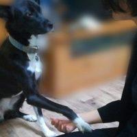 お手をするミックス犬