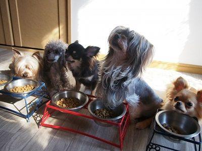 ご飯を食べる犬たち
